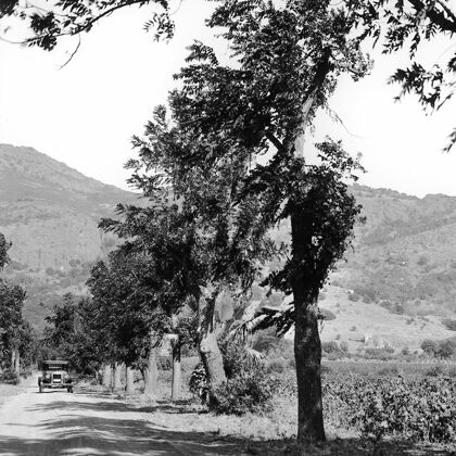 Stags' Leap Historic Photo of Old Automobile Driving Down the Lane off Silverado Trail