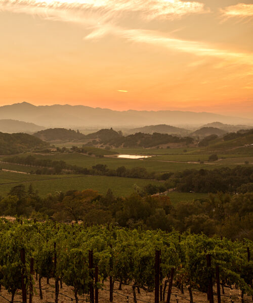 Stags' Leap Vineyard at Sunset