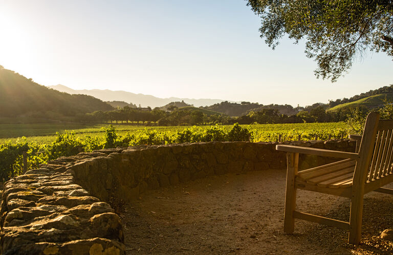 Stags' Leap Estate Vineyard in Napa Valley